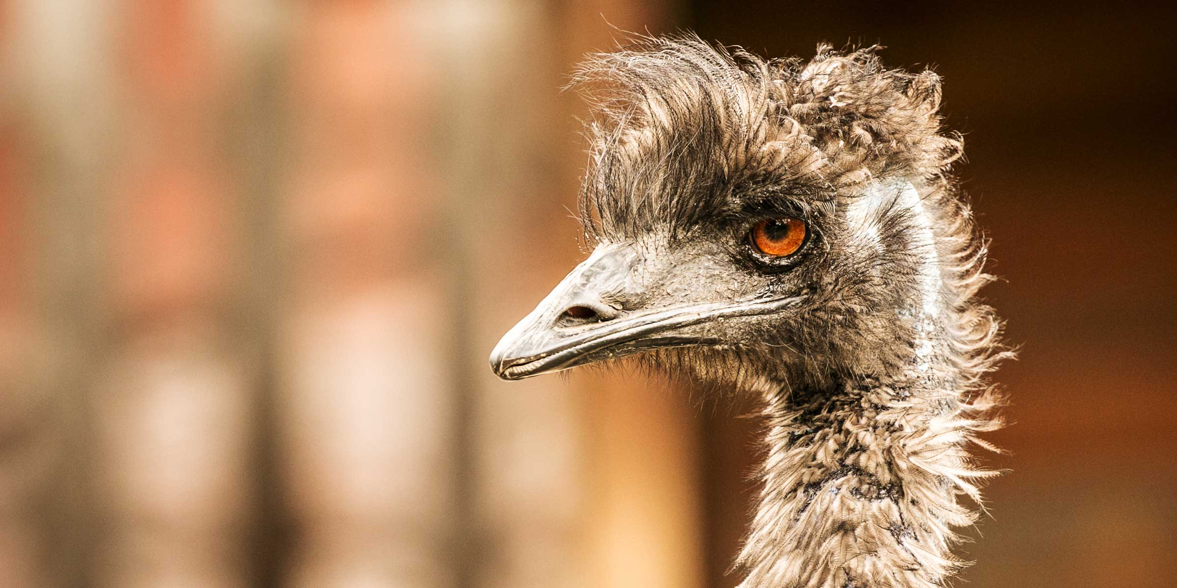Fairmont Funtasia - Animals - An Emu in the Columbia Valley